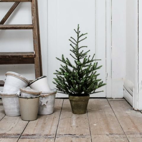 POTTED ANGEL PINE TREE 60CMS